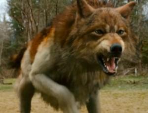 Jacob Setelah Berubah Jadi Serigala